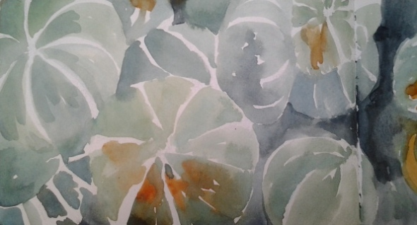 Squash, watercolor sketchbook, Fran Osborne, Berkeley Bowl, 2013