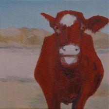 Cow at Tilden Park, Beef cow, free range farming, animal husbandry