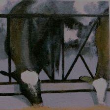 Fran Osborne, Factory Farm Dairy Cows, confinement, oil painting