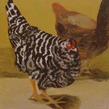 Free Range Cjicken, fran osborne, Oil painting